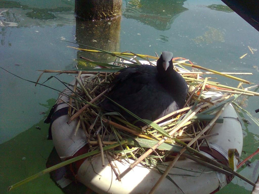 Noleggio barche a motore Lago di Garda